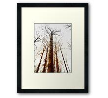 Fire trees... Framed Print