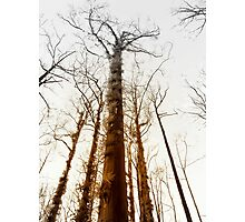 Fire trees... Photographic Print