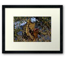 Leopard with prey Framed Print
