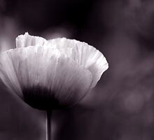 Independant Poppy by HeatherEllis