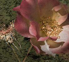 Rust 'n Roses ~ #11 by Rosalie Dale