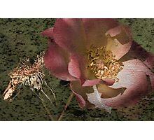Rust 'n Roses ~ #11 Photographic Print