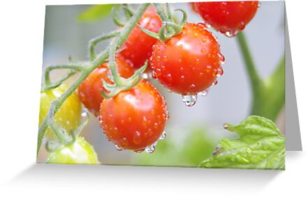 Fresh tomatoes by steppeland