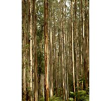 Black Spur Photographic Print