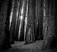 TOOTHPICKS FOR GIANTS by Froshi