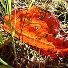 red Dock leaf by armadillozenith