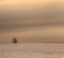 Lone Tree on a Hill at Penobsquis by Jamie Roach