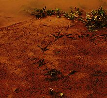 bird tracks in the mud by 2913