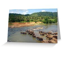 Pinnewala Elephant Orphanage. Sri Lanka. Greeting Card