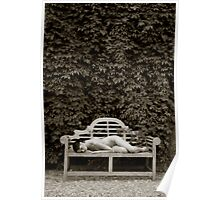 The Resting Bench Poster