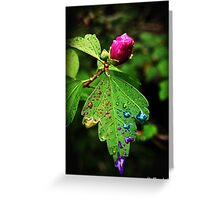 Pride: Don't Be Afraid To Bloom Greeting Card