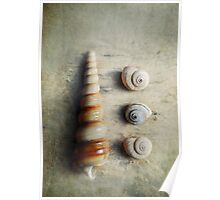 Shells on beach wood Poster
