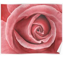 Close Up Rose - Dry Brush Oil Painting Poster