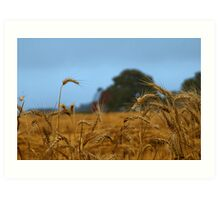 Kathy's Misty Wheat Field Art Print
