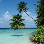 palm reef by springbob