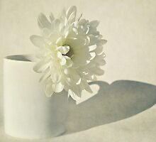 Chrysanthemum Shadow. by Lyn  Randle