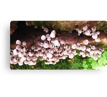 Fungus #4 Canvas Print