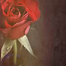 Red Rose. by Lyn  Randle