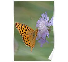 Butterfly on right position (High Brown Fritillary butterfly) Poster