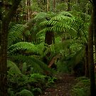 Ferny Walk  by MIchelle Thompson
