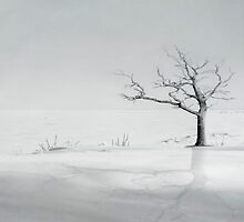 winter tree by flariat