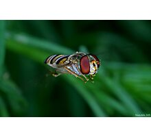 Hovering Photographic Print