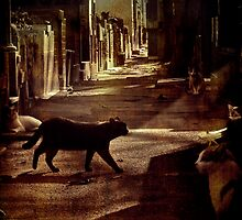 Cats by Igor Giamoniano