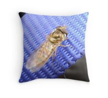 Gold on blue, a hover-fly Throw Pillow