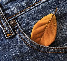 Blue Jeans by carlosporto