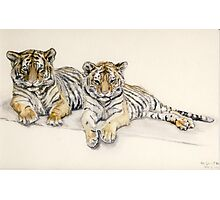 Tigercubs Photographic Print