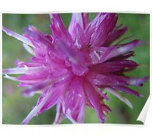Pink flower macro Poster