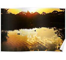 Sunrise (Leura, NSW  Australia) Poster