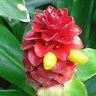 Flower by CyberCyntheche