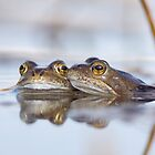 Friendly Frogs by Duncan Shaw