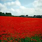 The Poppy-Field,Clonmel,Co,Tipperary,Ireland.[view-large] by Pat Duggan