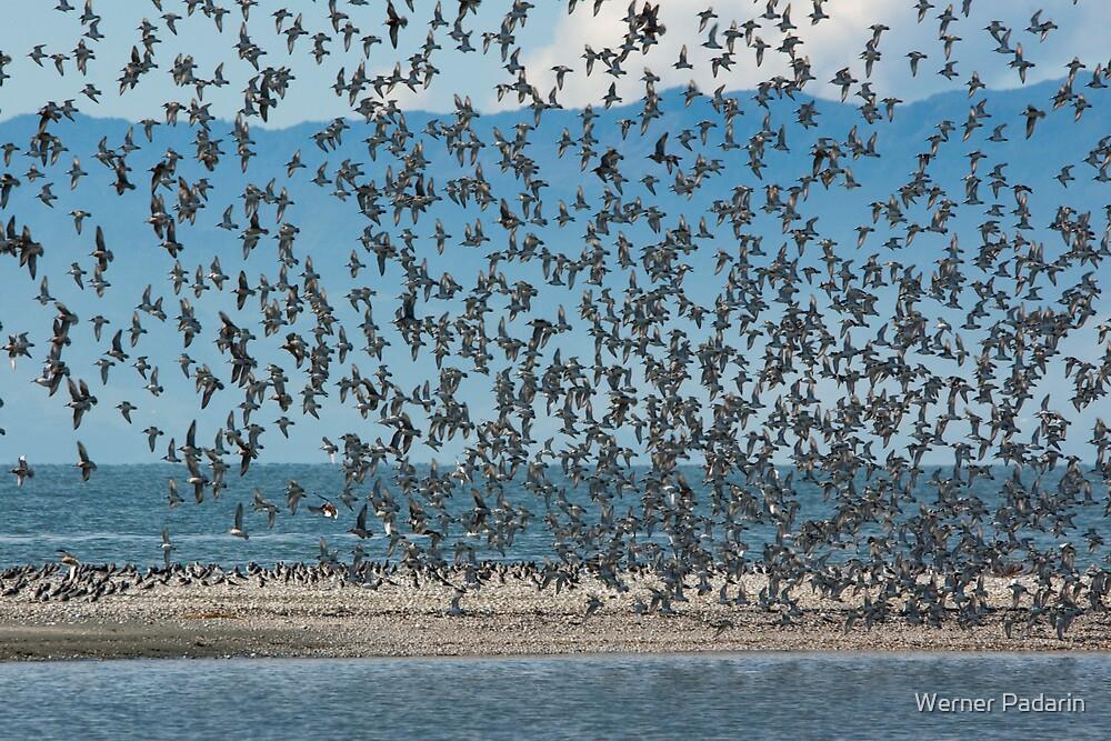 Sea Birds 2 by Werner Padarin