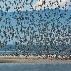 Sea Birds 2 by fotoWerner