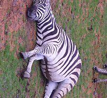 Listening Zebra by LionsRoar