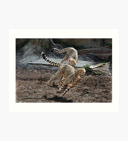 Running Cheetahs Art Print