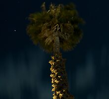 Night Palm by angusimages