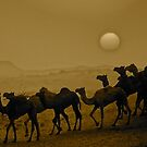 Camels  at  sunsetIRAQ by yoshiaki nagashima