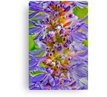 Colourful flower bud Canvas Print