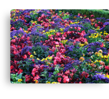 Profusion Canvas Print