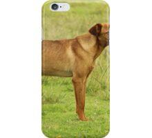 Brown Dog in a Field iPhone Case/Skin
