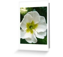 Primrose Beauty Greeting Card