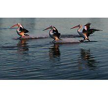 Pelican Trio Photographic Print