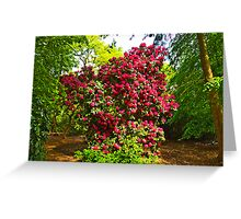Rhododendrons #2 Greeting Card