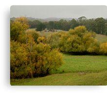 Autumn Rain, Otway Ranges,Forrest,Victoria Canvas Print