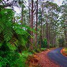Rainforest - Port Macquarie - Australia by Bryan Freeman