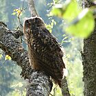 Eagle Owl by Martins Blumbergs